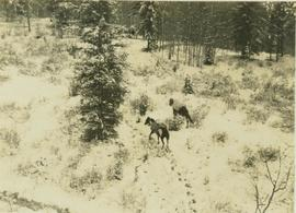 Two pack horses following a snowy trail