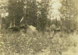 Horses and tents at a camp site set up in a forested location
