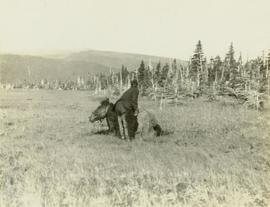 Unidentified crewman tending to a horse stuck in a muddy bog