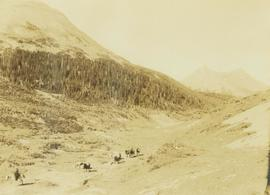 Pack horse train walking through a mountain valley
