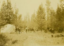 Horses and tent at Camp No. 1