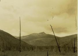 An old burn site in foreground, unidentified mountain in background
