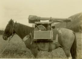 Side profile of pack horse and saddle especially designed for Gray's camera equipment