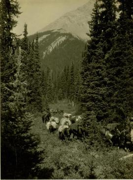 Men and pack horses on the trail to Barbara Lakes