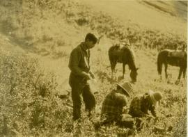 (L-R) Billy Taylor, Johnny Napolean and Pete Callao taking a break on a grassy slope
