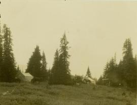 Tents and horses at Camp No. 12