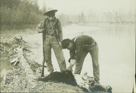 Two unidentified First Nations men working on a bear hide next to the Fraser River