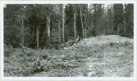 Cleared Area in Forest
