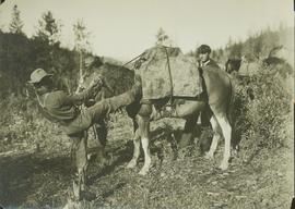 "Unidentified men loading a pack horse: ""Throwing the Diamond Hitch"""