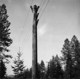 Telephone pole between Vernon and Arrow Lakes