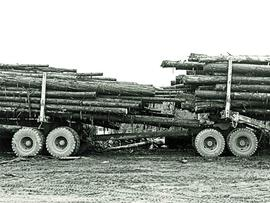 Close-up of two fully loaded logging truck trailers hitched together