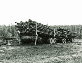 Two fully loaded logging truck trailers hitched together