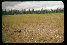 Cleared area at Aleza Lake Experiment Station