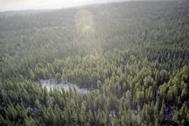 Aerial photograph of Aleza Lake Research Forest