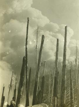 A man standing in the midst of a number of bare tree trunks