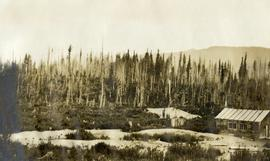 Spruce-Balsam Type Logged and Burned, Penny Ranger Station