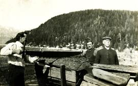 Archdeacon W.H. Collison  hauling wood with sons in Kincolith, BC