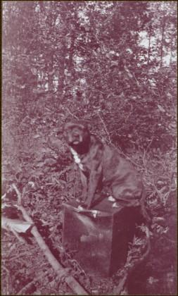 Taku River Survey - Dog Sitting on Box in Forest