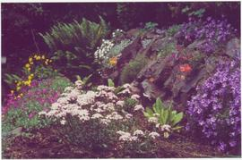 Close view of flowers and ferns in a rock garden