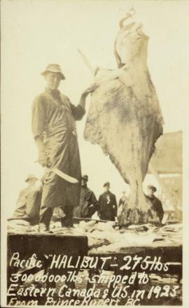 275 pound halibut in Prince Rupert, BC
