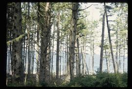 Coastal Forest - Trees