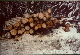 Stack of saw logs