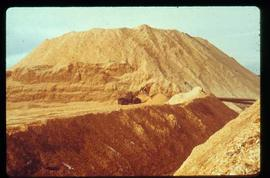 Pulpmill - General - Front end loader in front of a mountain of wood chips