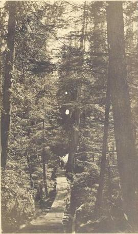 Two men on a bridge in a forest, with wooden stairs in foreground