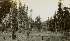 A man standing in a field surrounded by trees