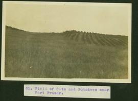 Field of oats and potatoes near Fort Fraser