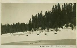 Six moose walking along a frozen river near Prince George, BC